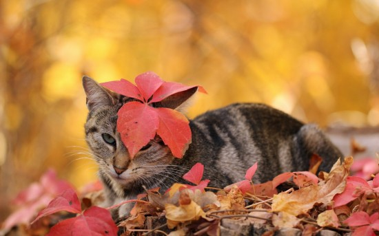 秋,可愛い,猫,画像,まとめ002
