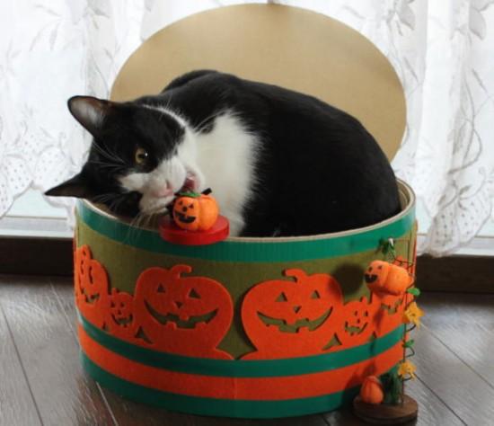 秋,可愛い,猫,画像,まとめ003