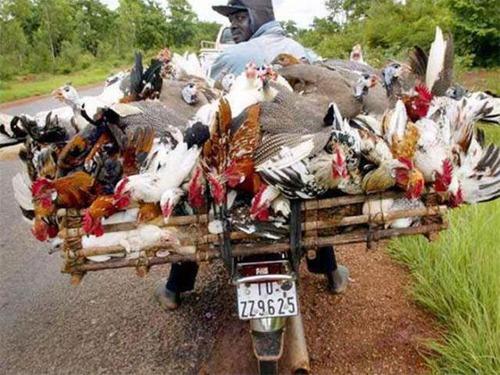 限界,バイク,荷物,積んでいる,おもしろ画像,まとめ006