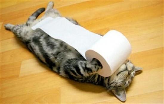 笑ったら負け,猫,おもしろ画像,まとめ007