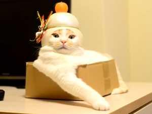 ほっこり,おもしろ,猫,画像,まとめ009