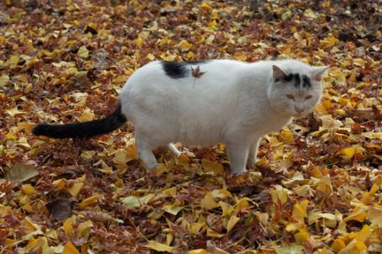 秋,可愛い,猫,画像,まとめ010