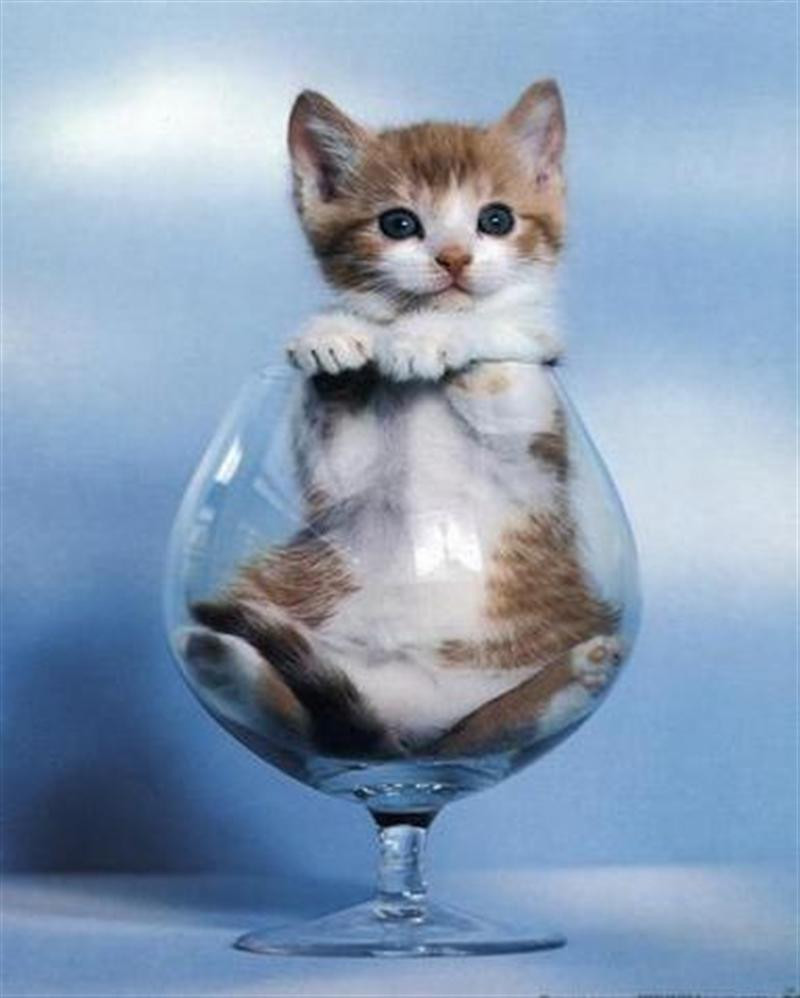 ほっこり,おもしろ,猫,画像,まとめ011