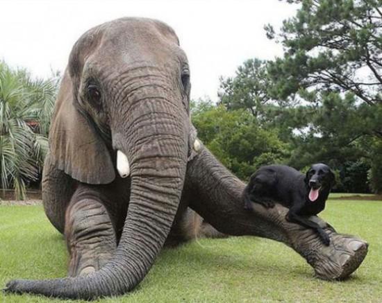 仲良し,動物,画像,まとめ012