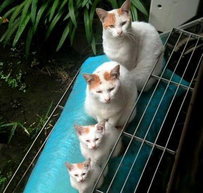 ほっこり,おもしろ,猫,画像,まとめ013
