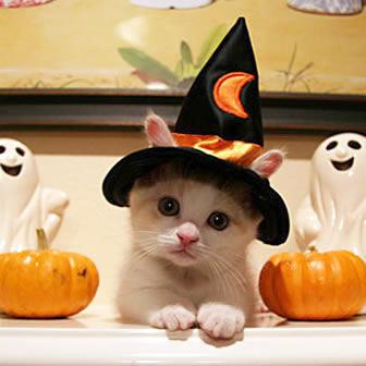 秋,可愛い,猫,画像,まとめ014
