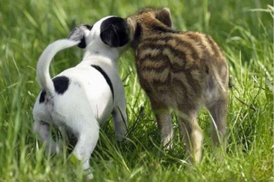 仲良し,動物,画像,まとめ014