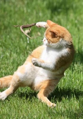 ほっこり,おもしろ,猫,画像,まとめ014