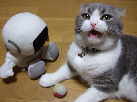 ほっこり,おもしろ,猫,画像,まとめ015
