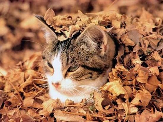 秋,可愛い,猫,画像,まとめ016