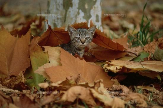 秋,可愛い,猫,画像,まとめ018