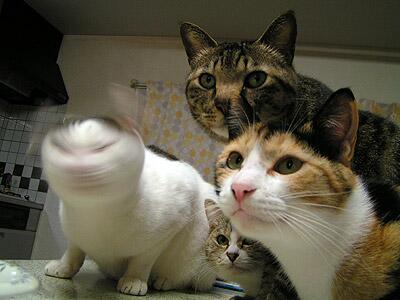笑ったら負け,猫,おもしろ画像,まとめ018