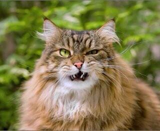 笑ったら負け,猫,おもしろ画像,まとめ019