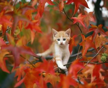秋,可愛い,猫,画像,まとめ020