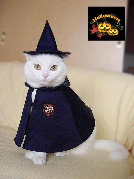 秋,可愛い,猫,画像,まとめ023