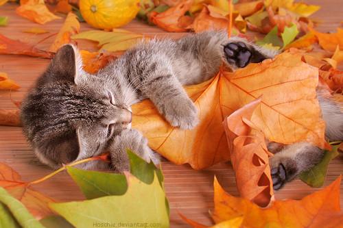 秋,可愛い,猫,画像,まとめ025