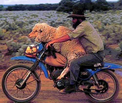 限界,バイク,荷物,積んでいる,おもしろ画像,まとめ026