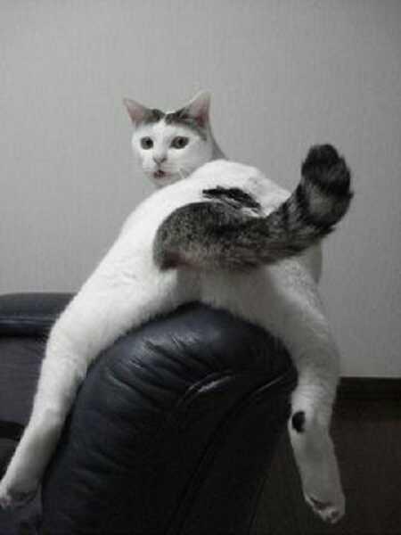 笑ったら負け,猫,おもしろ画像,まとめ037