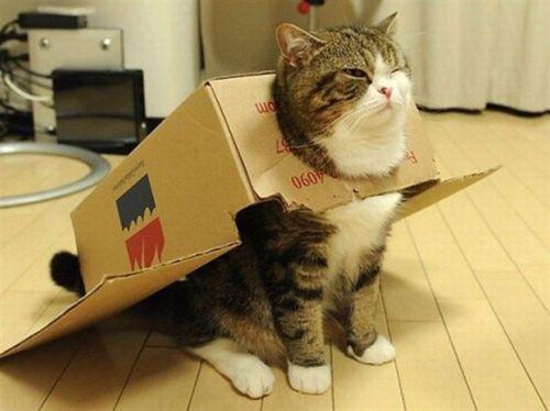 笑ったら負け,猫,おもしろ画像,まとめ039