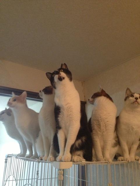 ほっこり,おもしろ,猫,画像,まとめ042