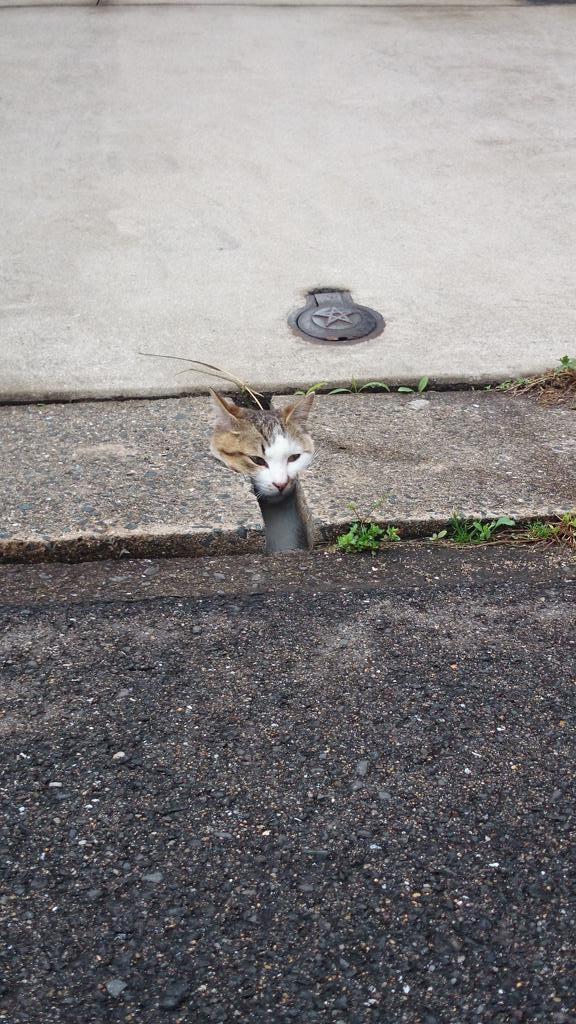思わず笑ってしまう,猫,おもしろ画像,まとめ016