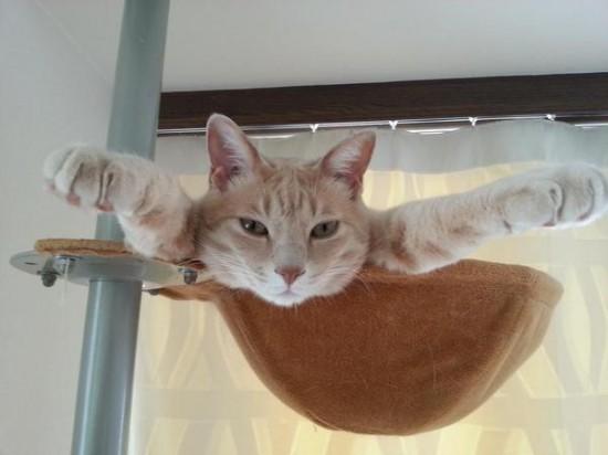 思わず笑ってしまう,猫,おもしろ画像,まとめ021