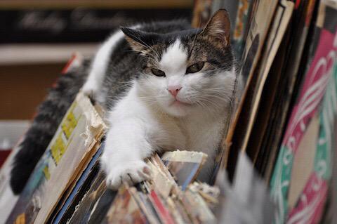 思わず笑ってしまう,猫,おもしろ画像,まとめ023