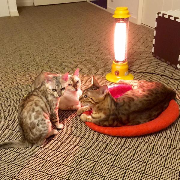 思わず笑ってしまう,猫,おもしろ画像,まとめ049