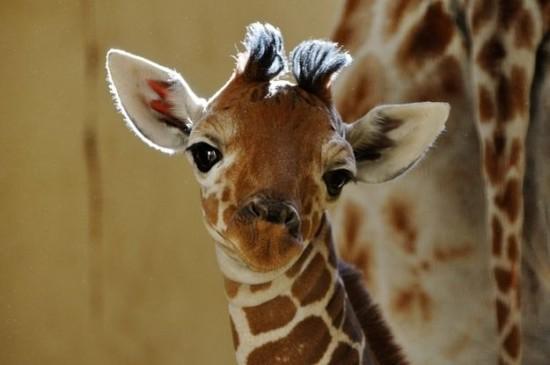愛らしい,動物,赤ちゃん,画像,まとめ010