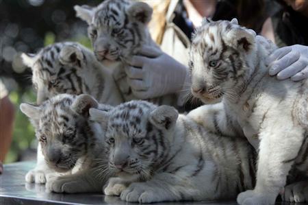 愛らしい,動物,赤ちゃん,画像,まとめ015