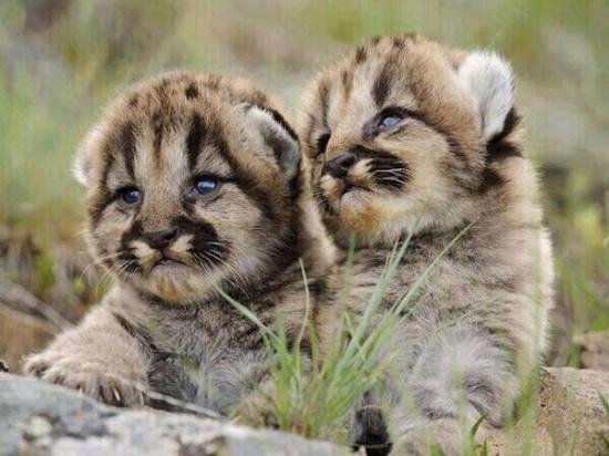 愛らしい,動物,赤ちゃん,画像,まとめ019