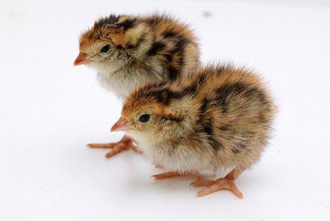 愛らしい,動物,赤ちゃん,画像,まとめ062