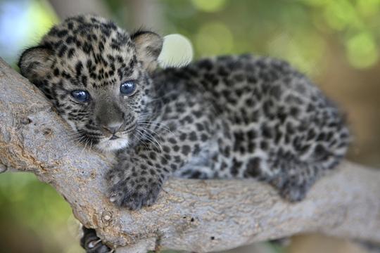 愛らしい,動物,赤ちゃん,画像,まとめ092