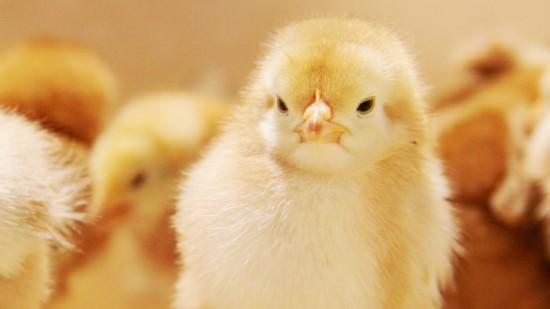 愛らしい,動物,赤ちゃん,画像,まとめ115