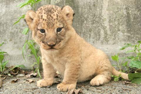 愛らしい,動物,赤ちゃん,画像,まとめ118