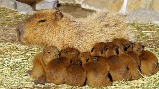 愛らしい,動物,赤ちゃん,画像,まとめ139