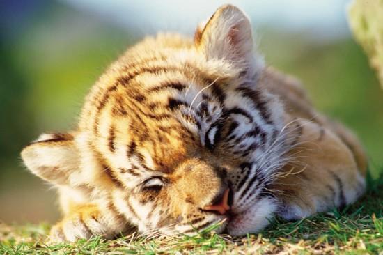 愛らしい,動物,赤ちゃん,画像,まとめ165