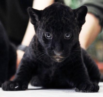 愛らしい,動物,赤ちゃん,画像,まとめ190