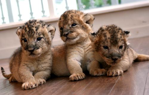 愛らしい,動物,赤ちゃん,画像,まとめ195