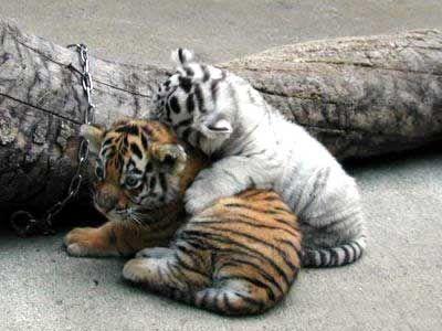 愛らしい,動物,赤ちゃん,画像,まとめ200