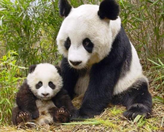 愛らしい,動物,赤ちゃん,画像,まとめ220