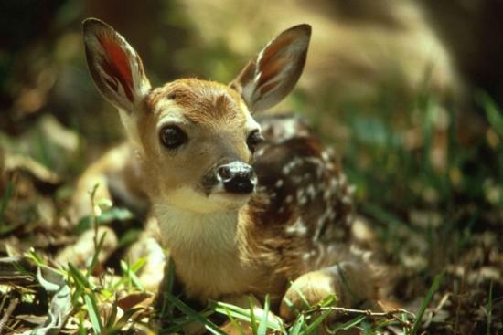 愛らしい,動物,赤ちゃん,画像,まとめ228