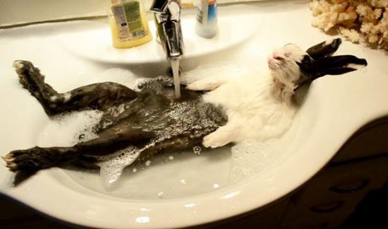 お風呂,満喫,可愛い,動物,画像,まとめ002