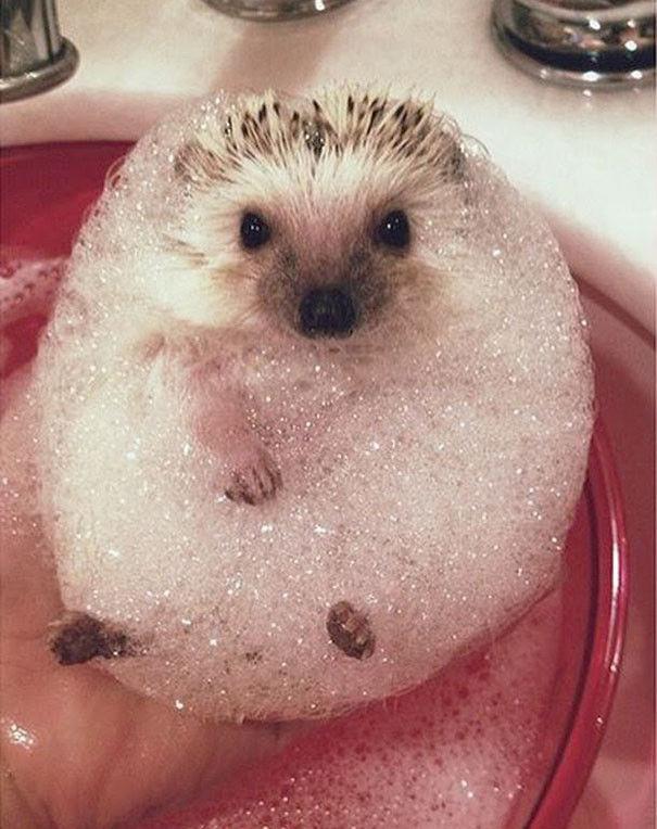 お風呂,満喫,可愛い,動物,画像,まとめ008