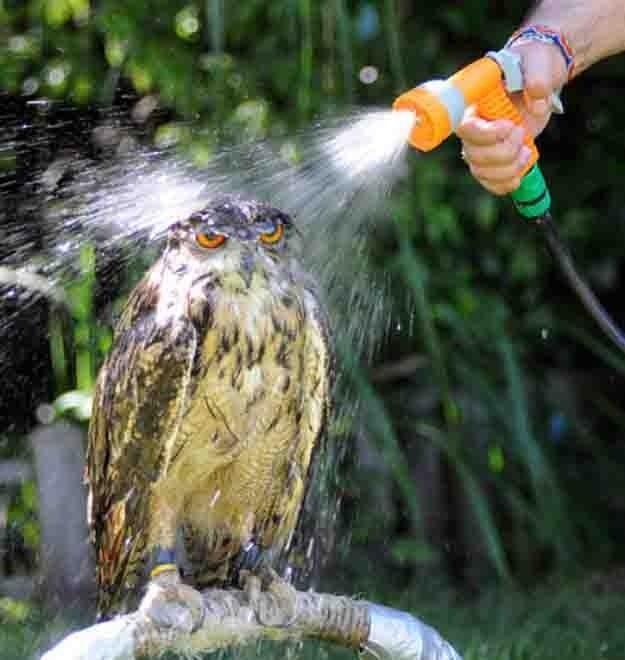 お風呂,満喫,可愛い,動物,画像,まとめ010