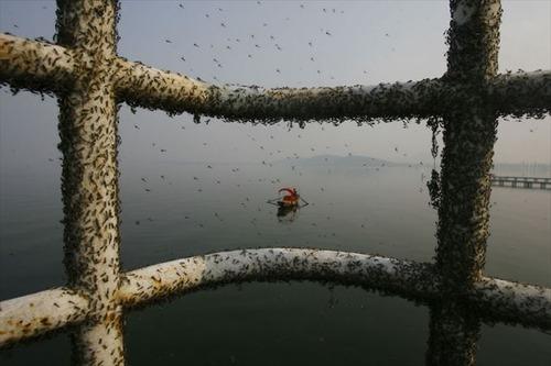 これはひどい,中国,大気汚染,画像,まとめ012