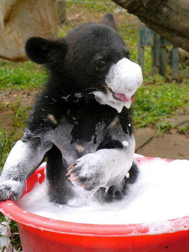 お風呂,満喫,可愛い,動物,画像,まとめ012