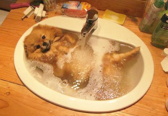 お風呂,満喫,可愛い,動物,画像,まとめ018
