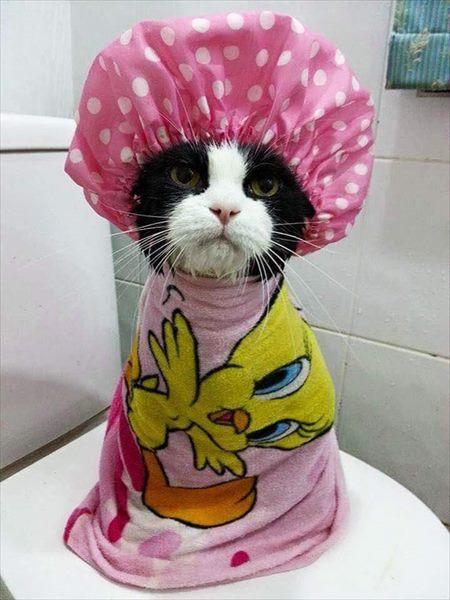 お風呂,満喫,可愛い,動物,画像,まとめ023