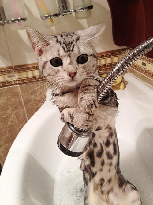 お風呂,満喫,可愛い,動物,画像,まとめ042
